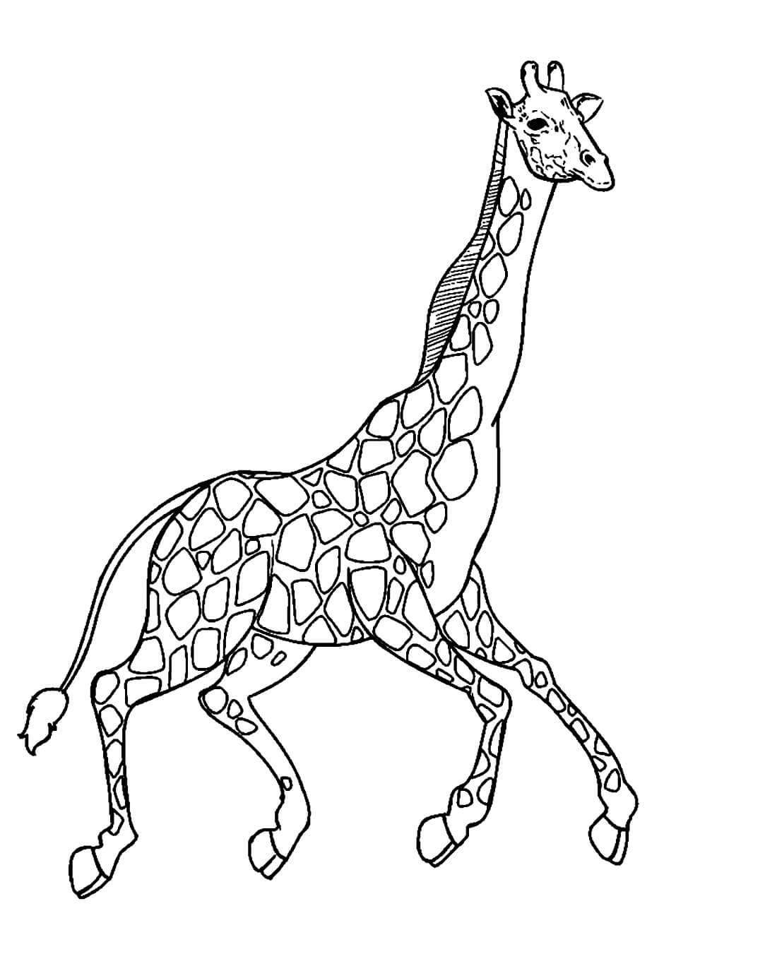 Раскраска Бегущий жираф