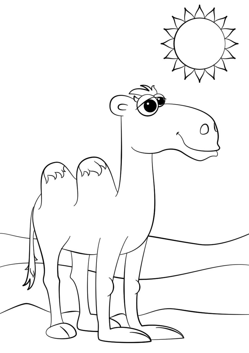 Раскраска Детёныш верблюда