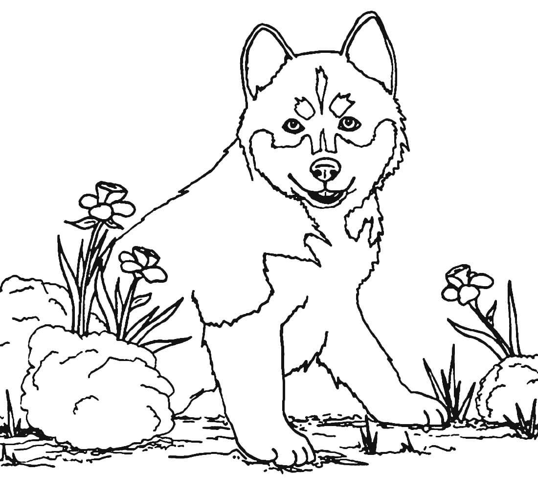 Раскраска Домашний щенок
