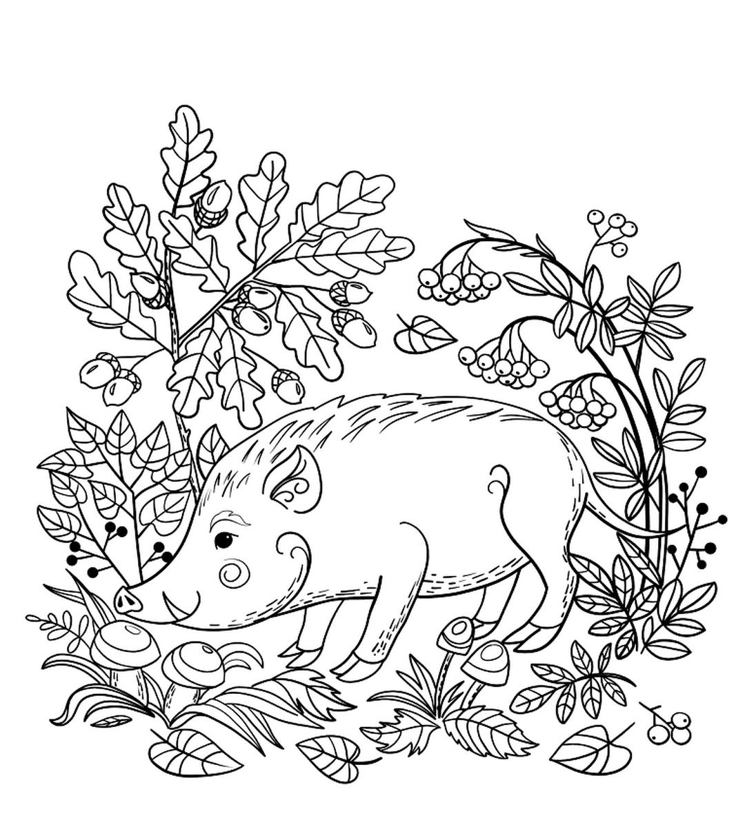 Раскраска Кабан в дикой природе
