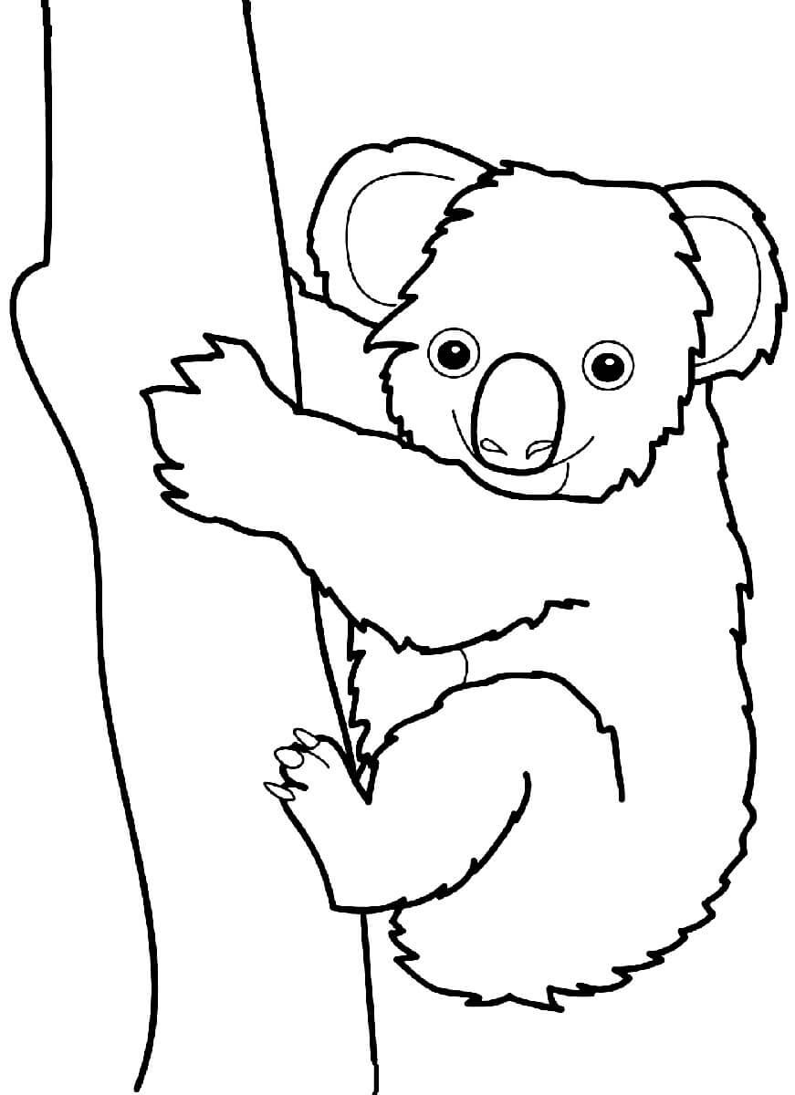 Раскраска Коала взбирается на дерево