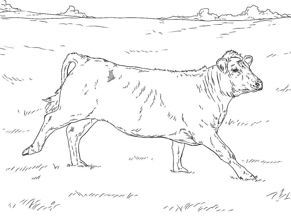 Раскраска Бегущая корова