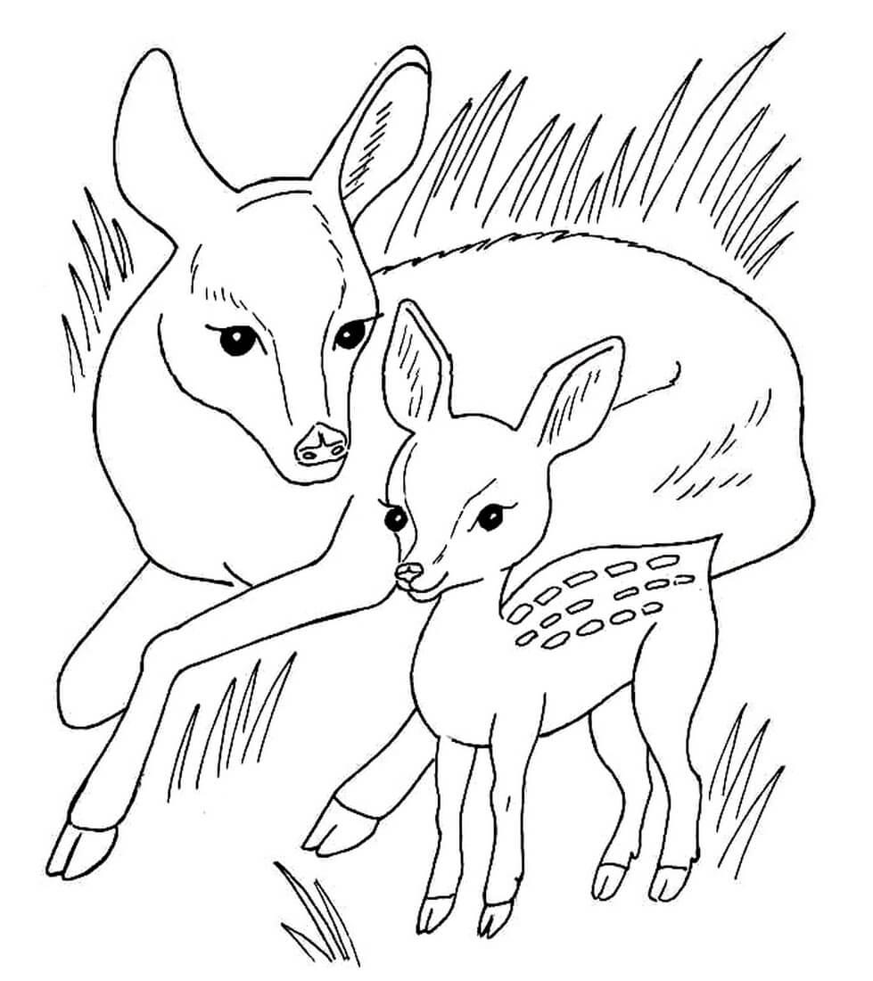 Раскраска Косуля с детёнышем