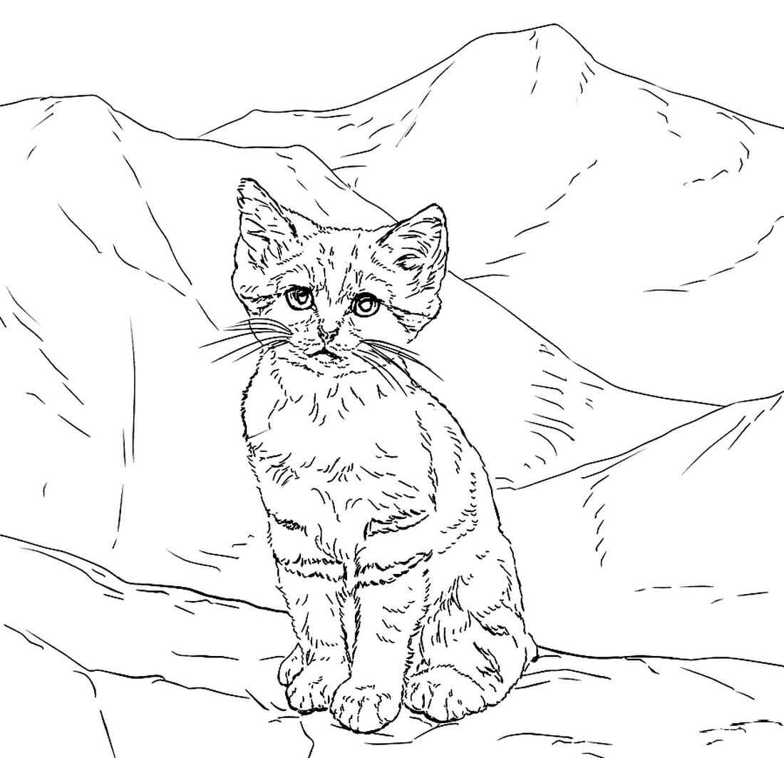 Раскраска Котёнок песчаной кошки