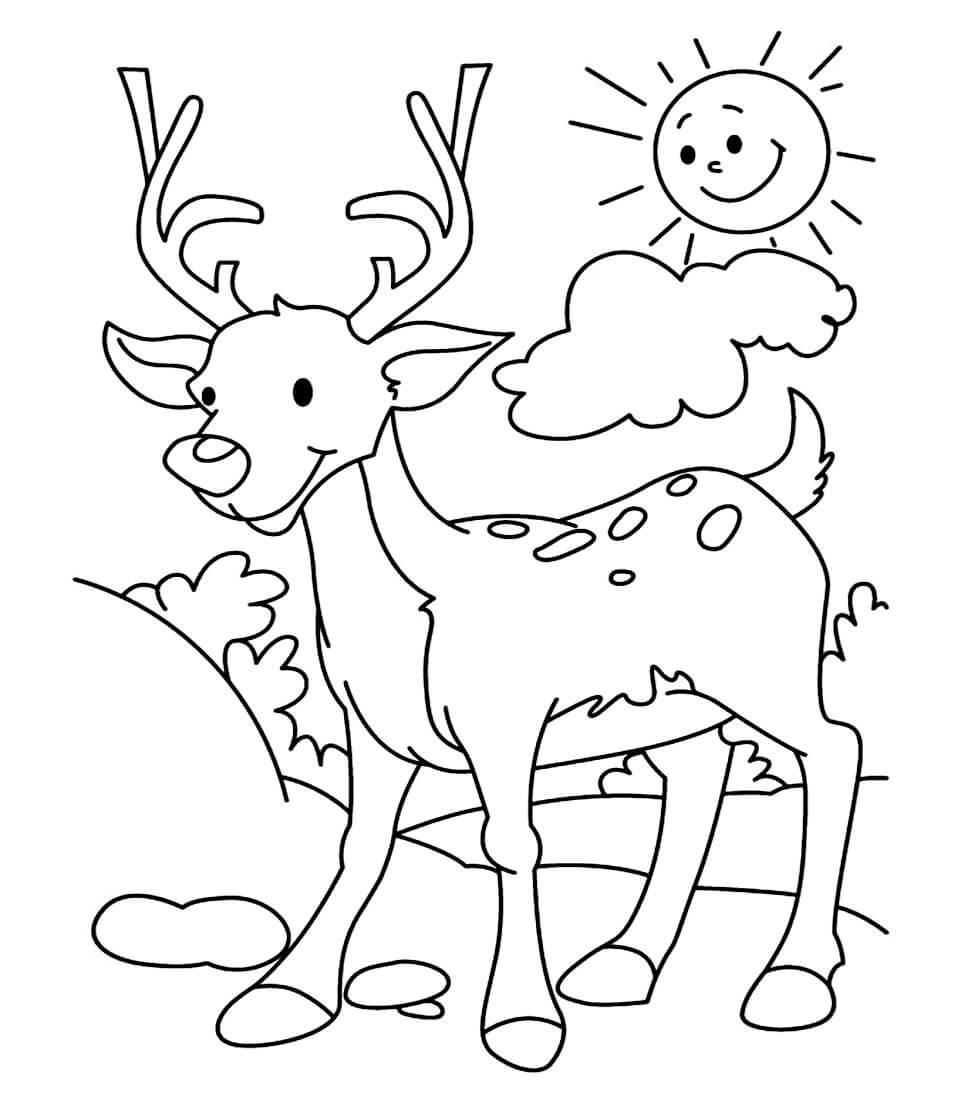 Раскраска Красивый оленёнок
