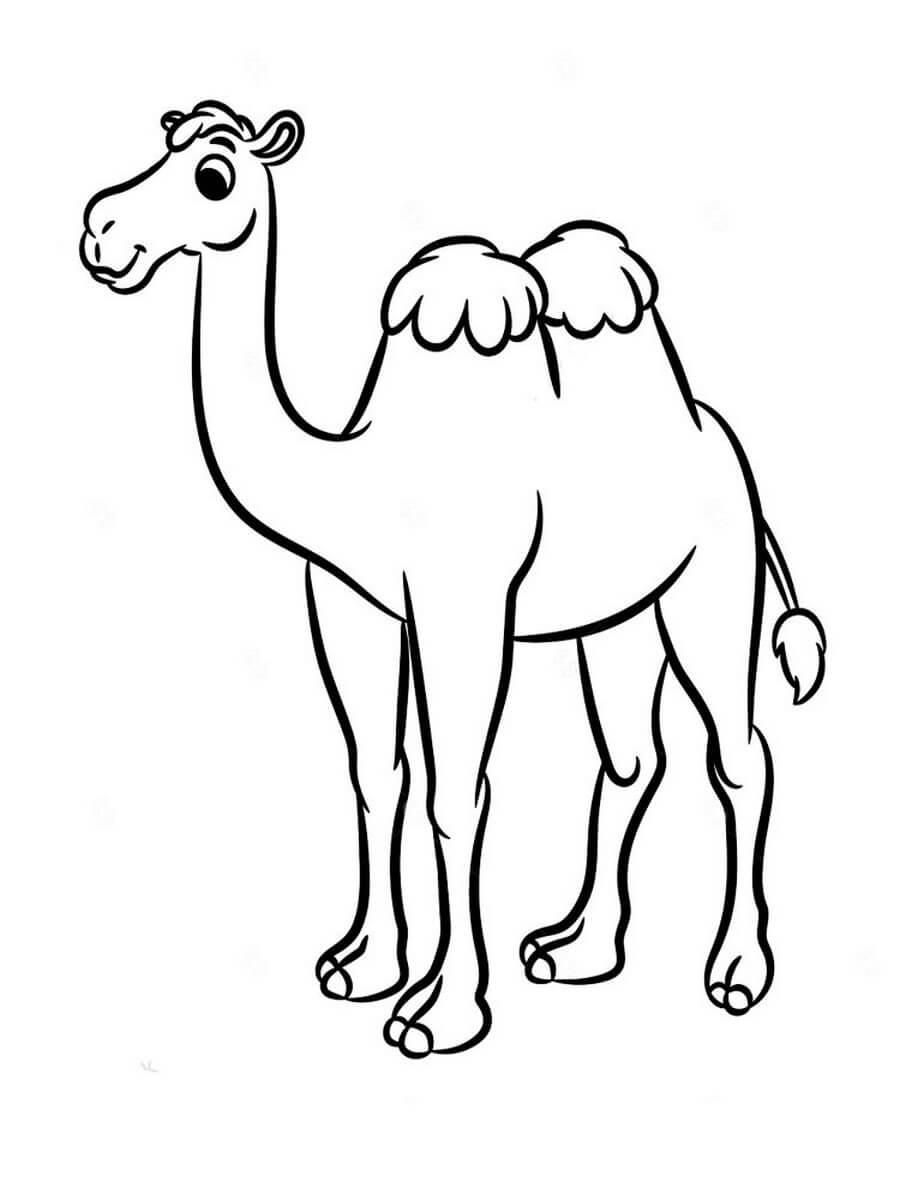 Раскраска Красивый верблюд