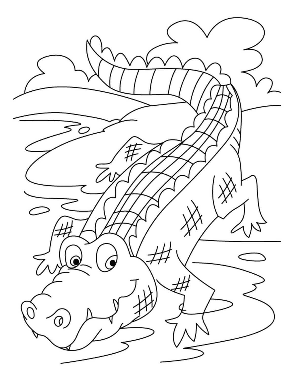 Раскраска Крокодил в водоёме