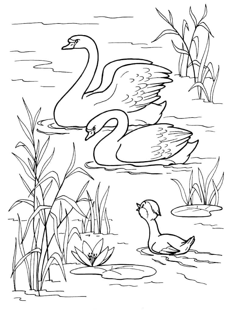Раскраска Лебеди в озере
