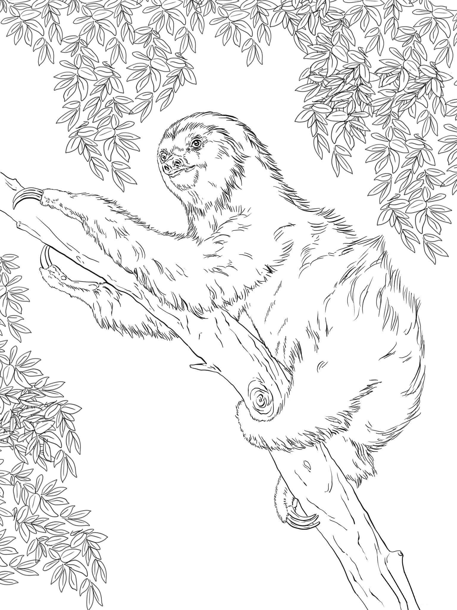 Раскраска Ленивец
