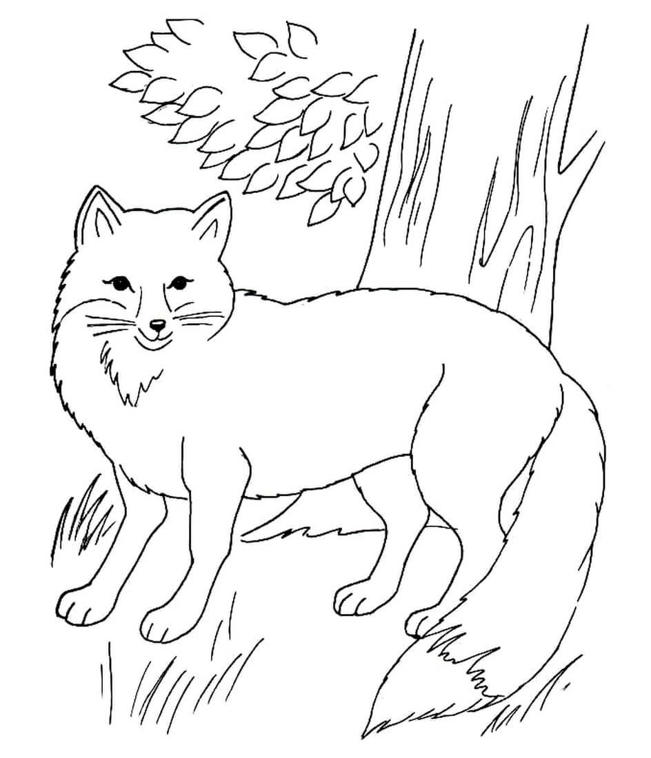 Раскраска Лисица в лесу