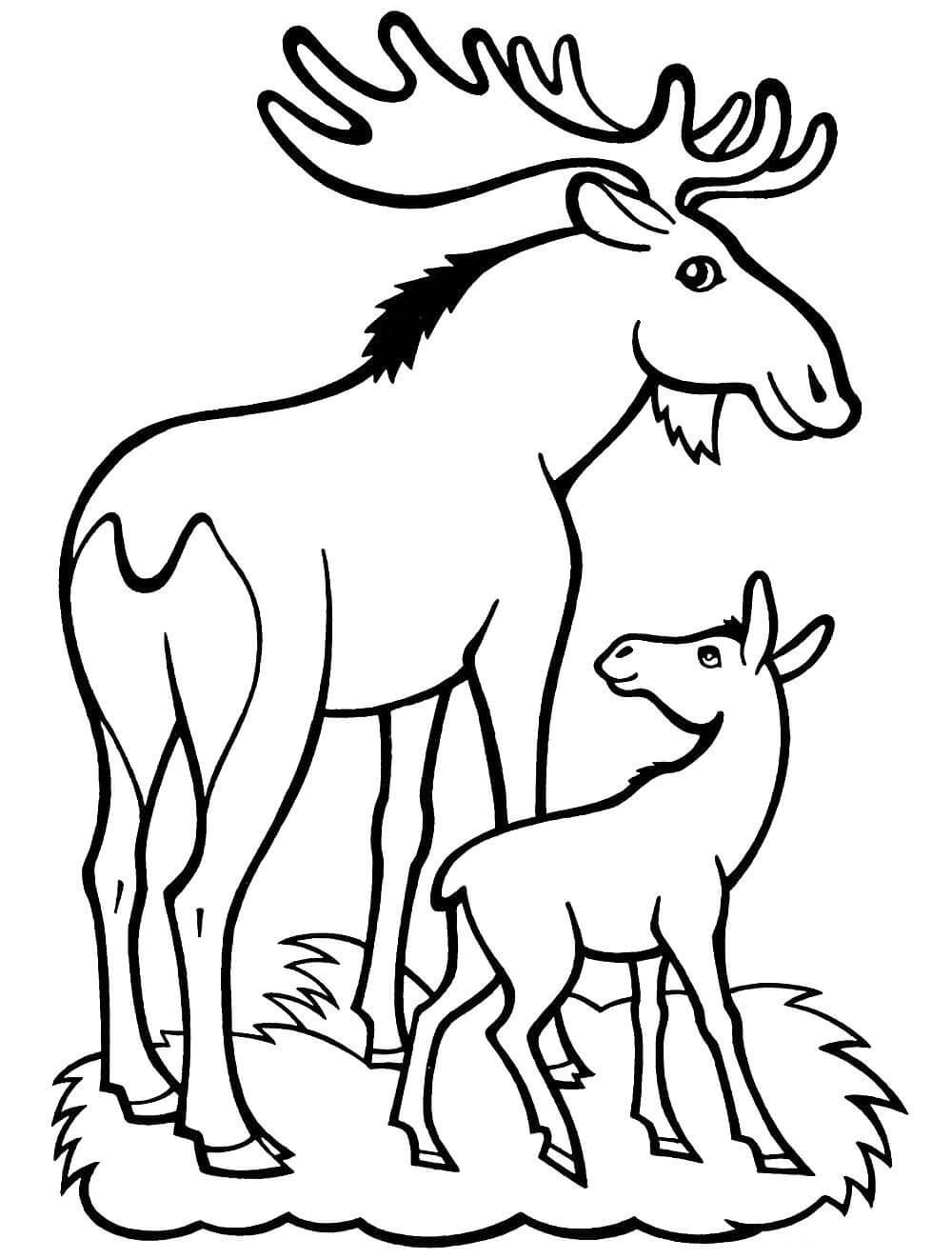 Раскраска Лось с детёнышем
