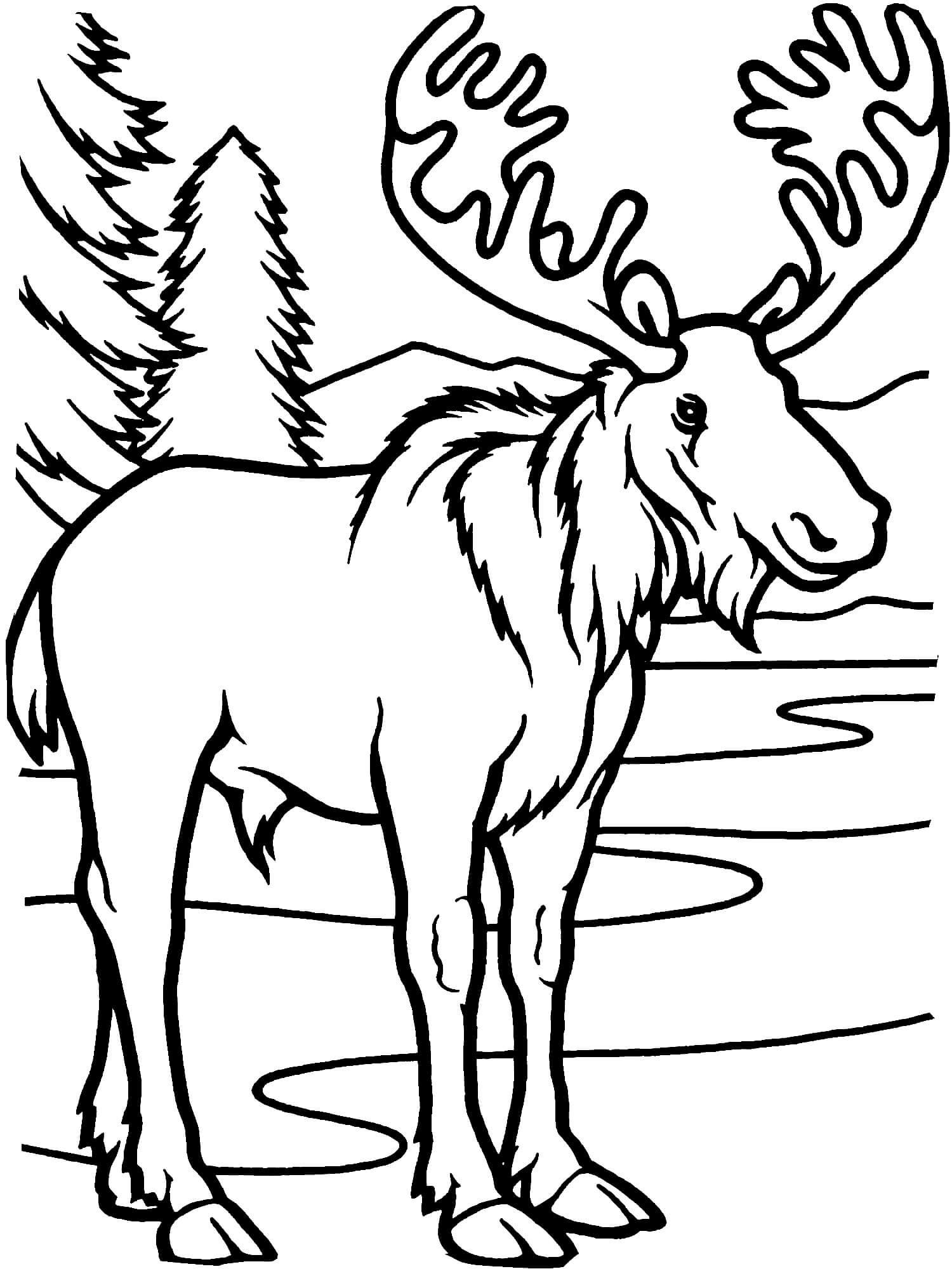 Раскраска Лось в лесу