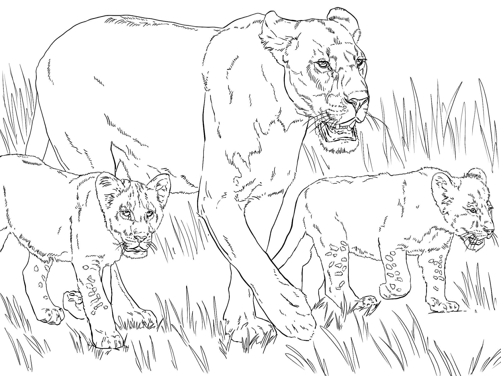 Раскраска Львица со львятами