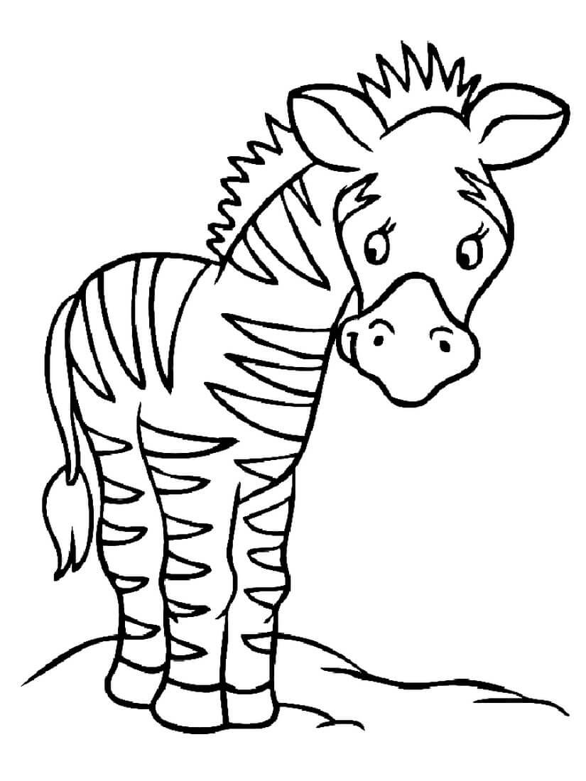 Раскраска Маленькая зебра