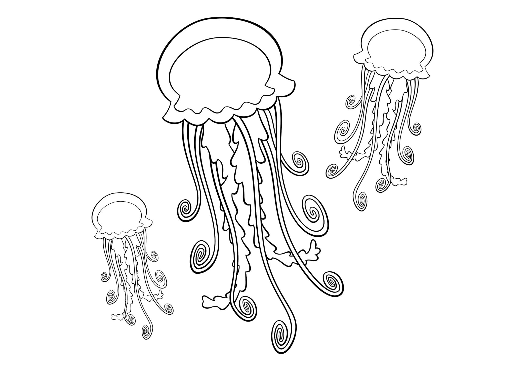 Раскраска Медузы