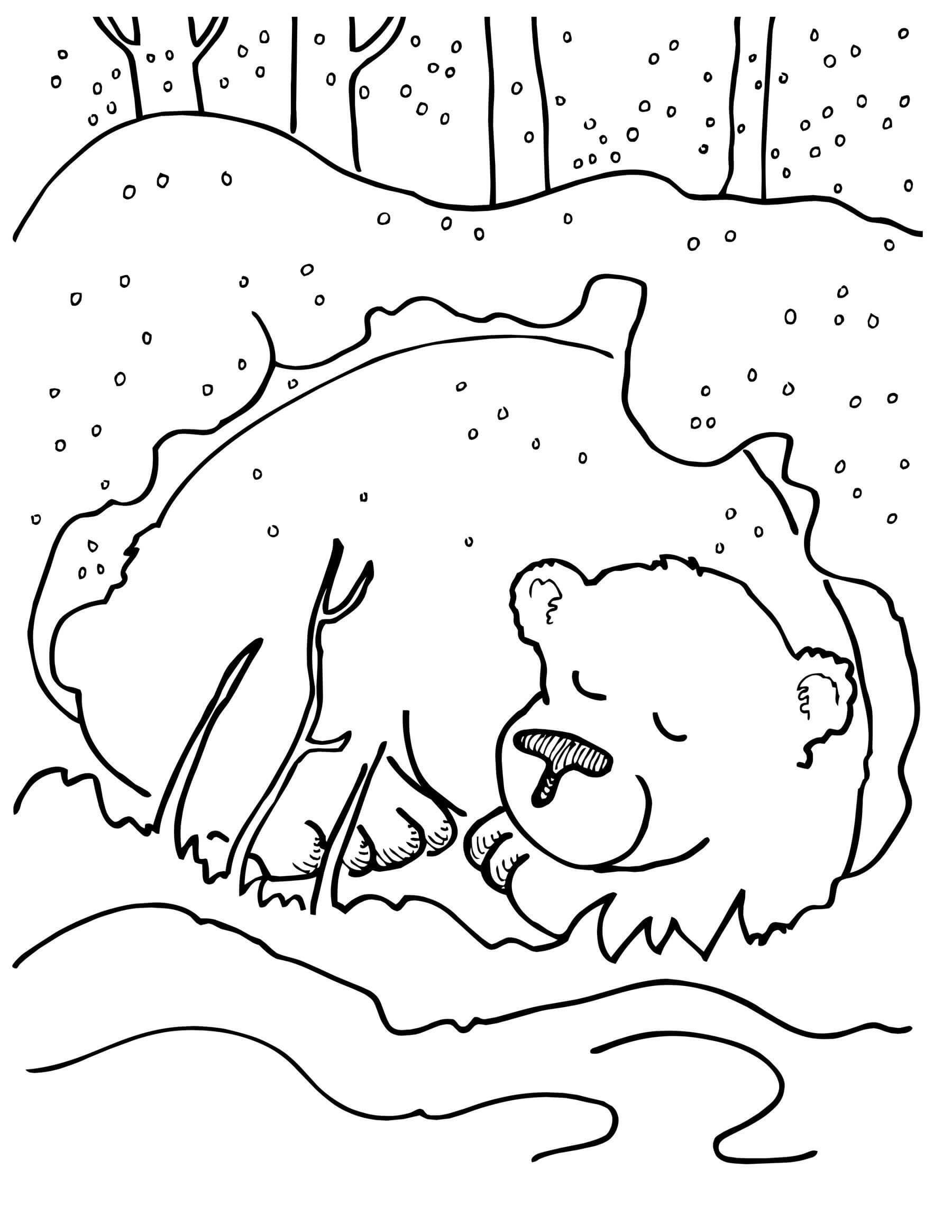 Раскраска Медведь в спячке