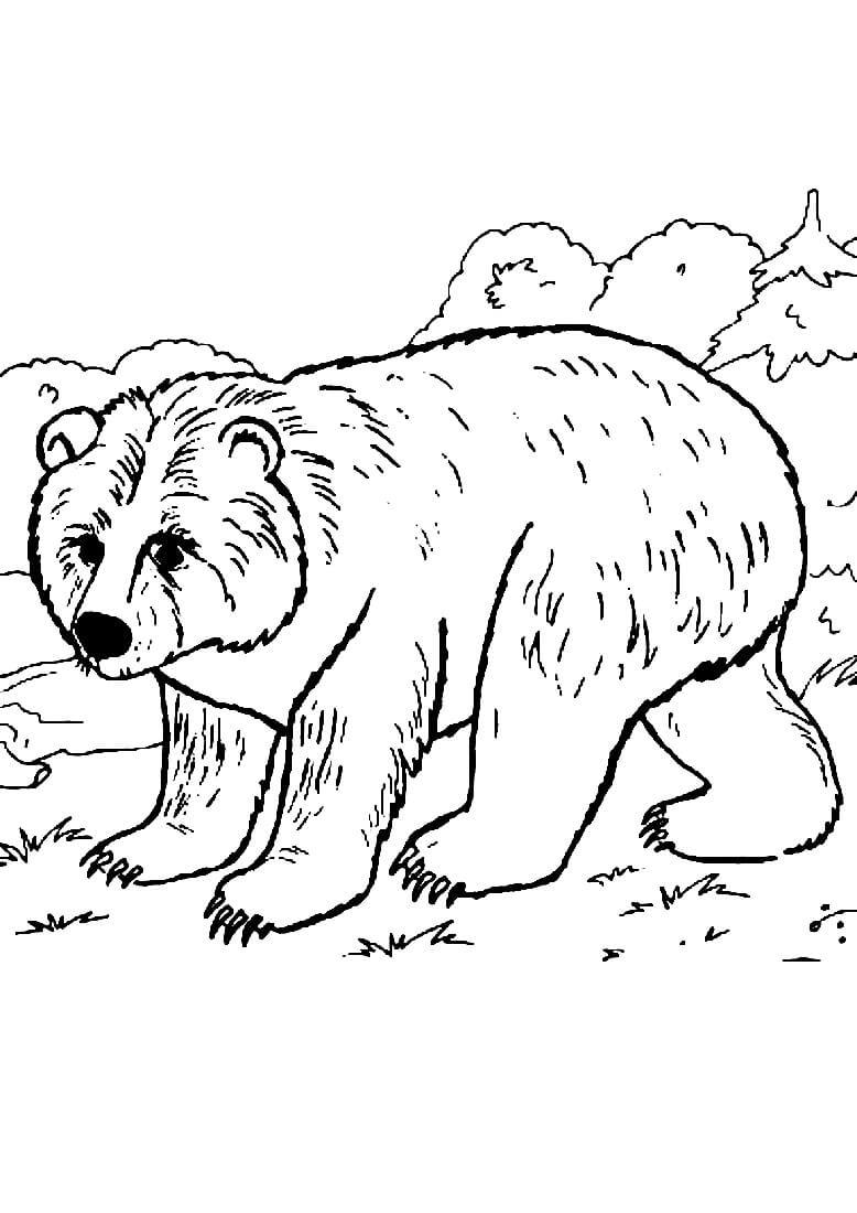 Раскраска Медвежонок в лесу