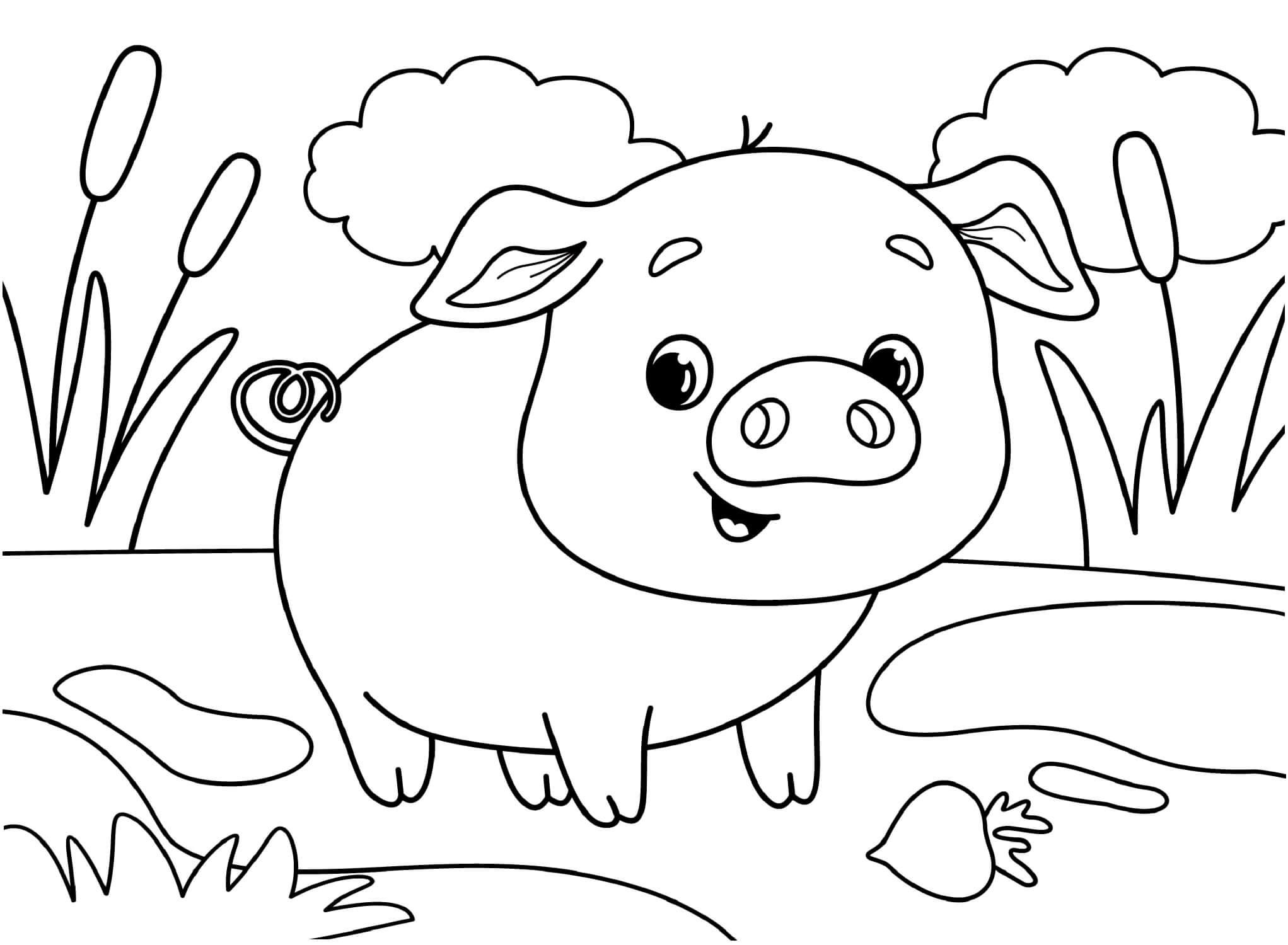 Раскраска Милая свинка