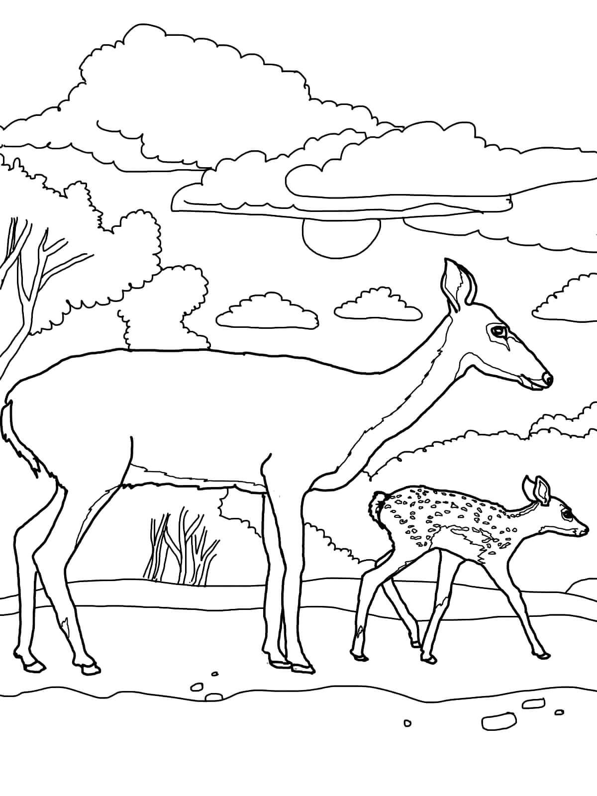 Раскраска Олениха с детёнышем