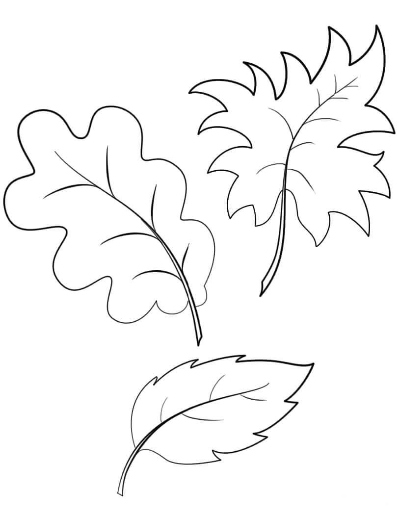 Раскраска Опадающая листва