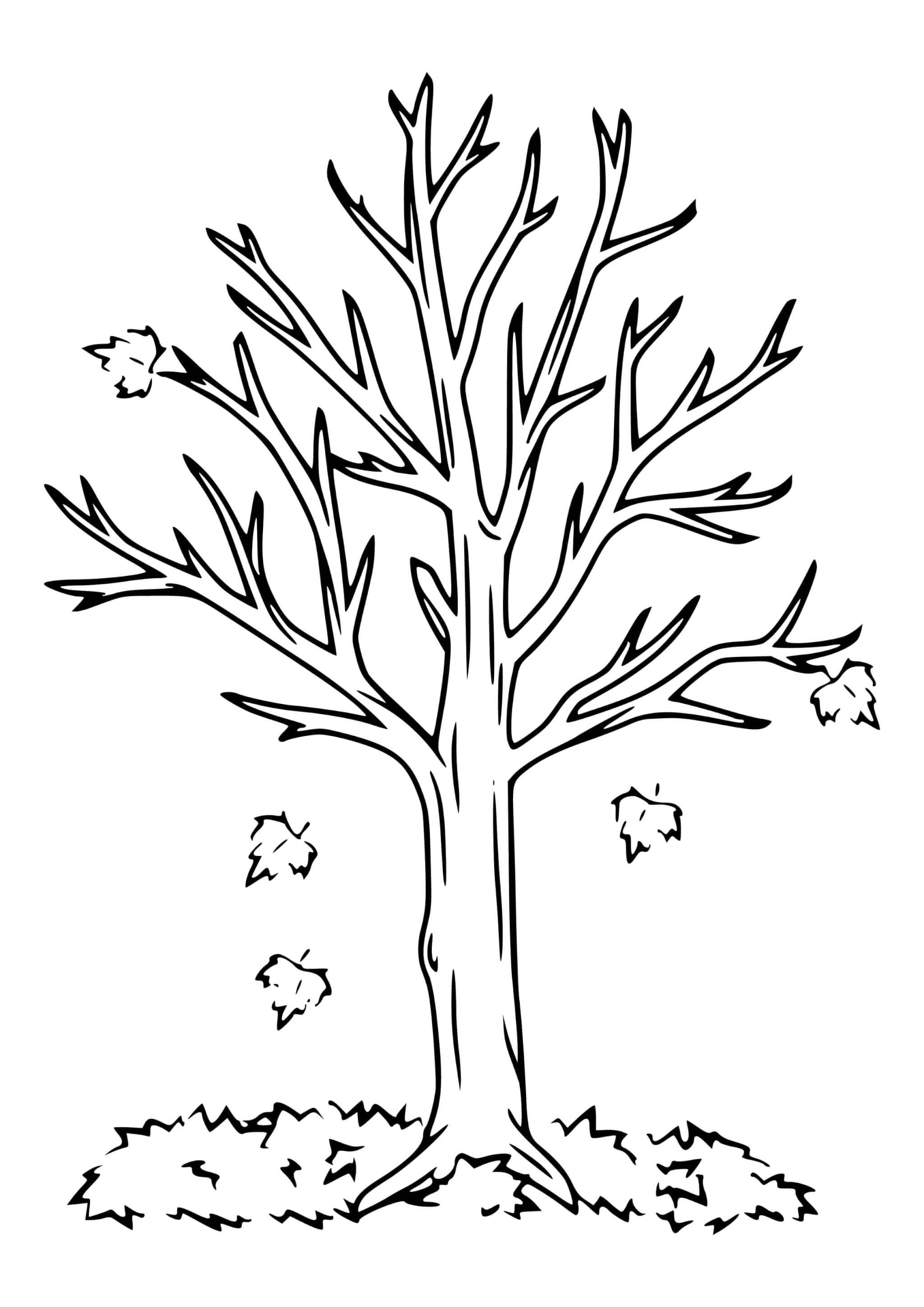 Раскраска Осеннее дерево