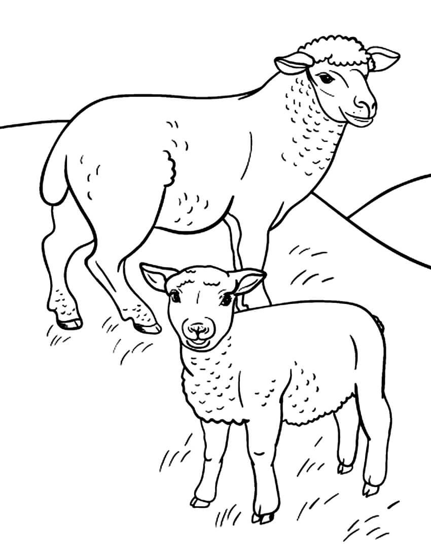Раскраска Овечка с детёнышем