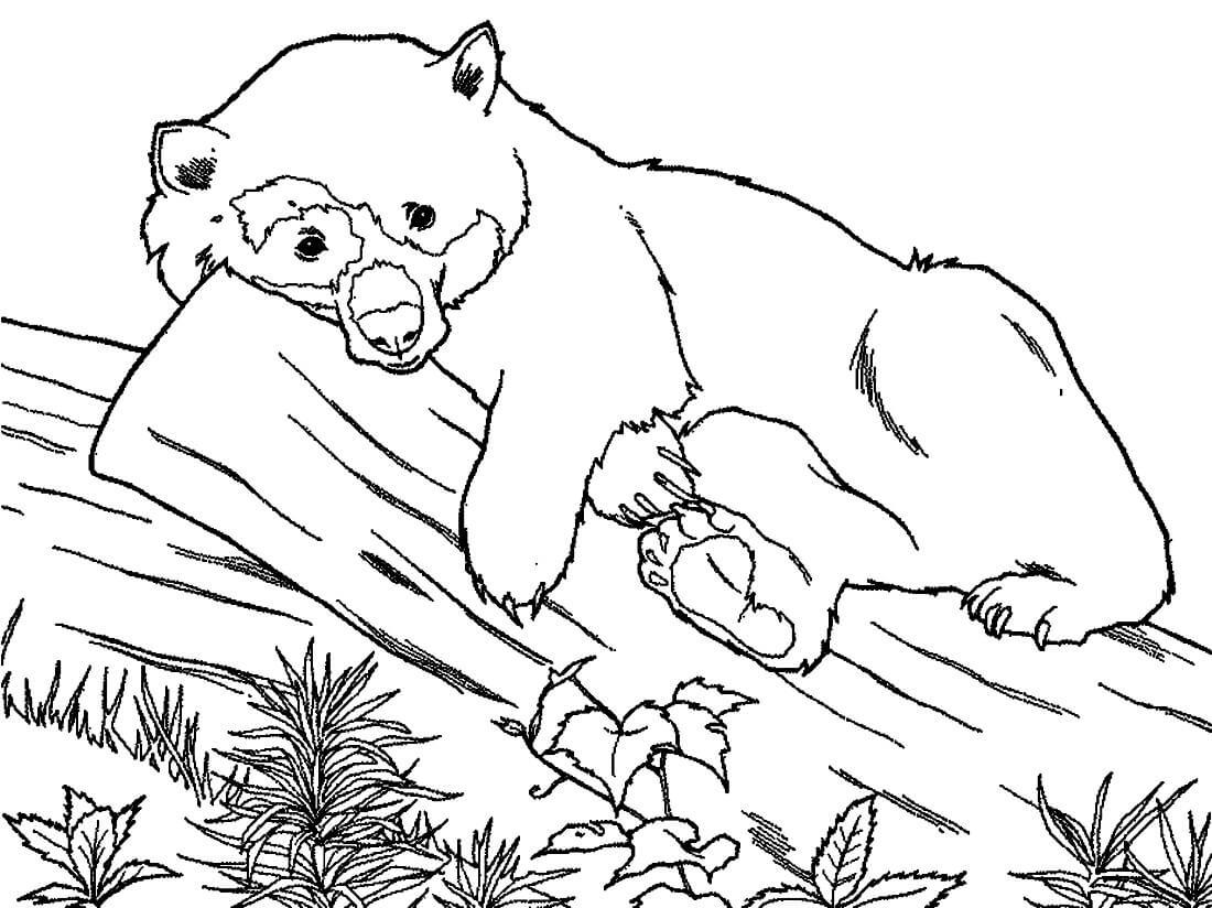 Раскраска Панда