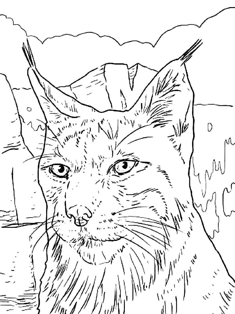 Раскраска Портрет рыси