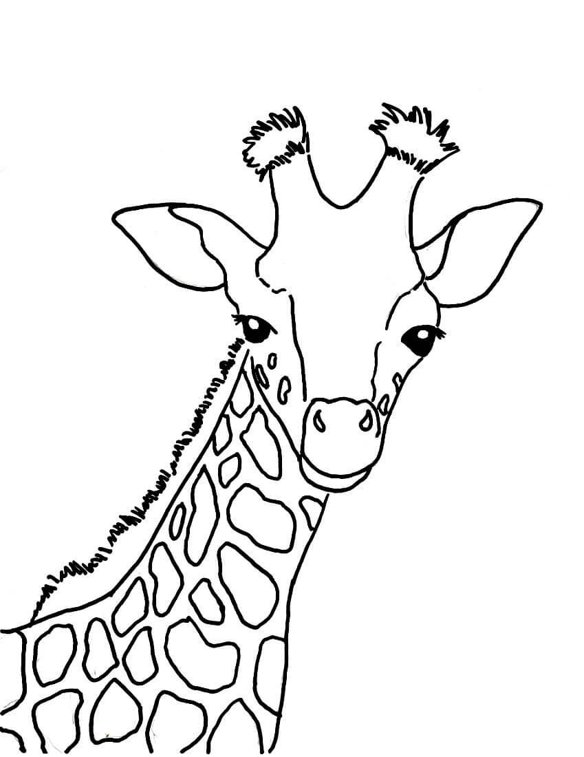 Раскраска Портрет жирафа