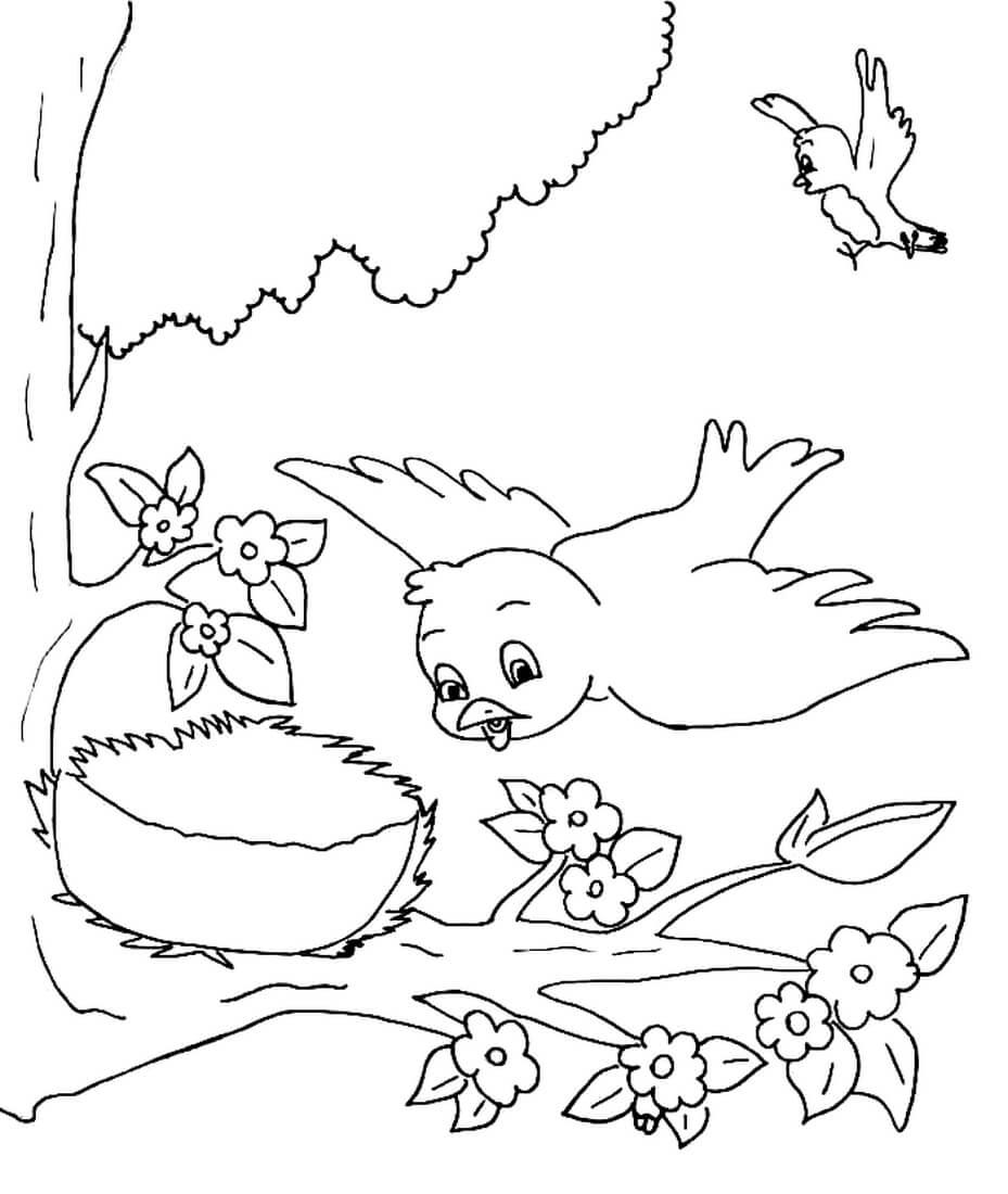Раскраска Птичка и гнездо