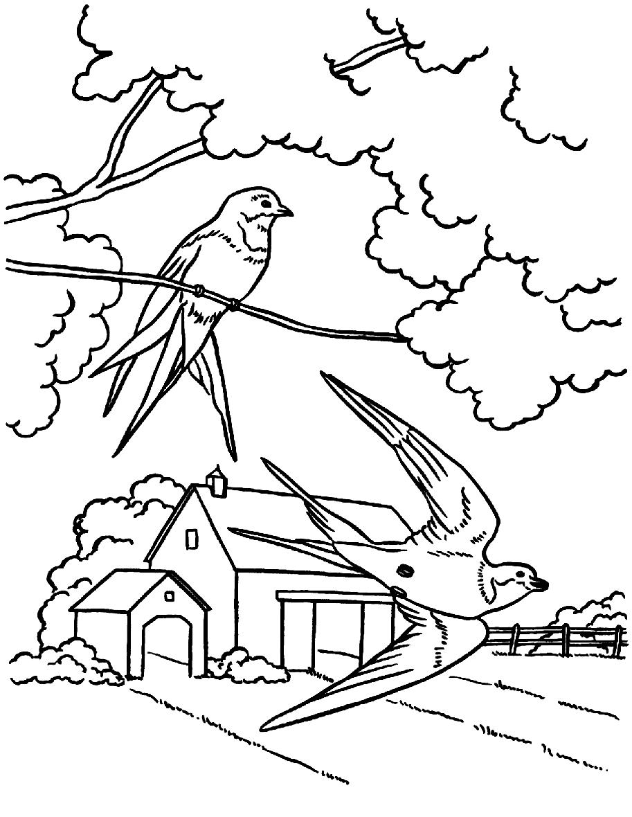 Раскраска Птицы прилетели