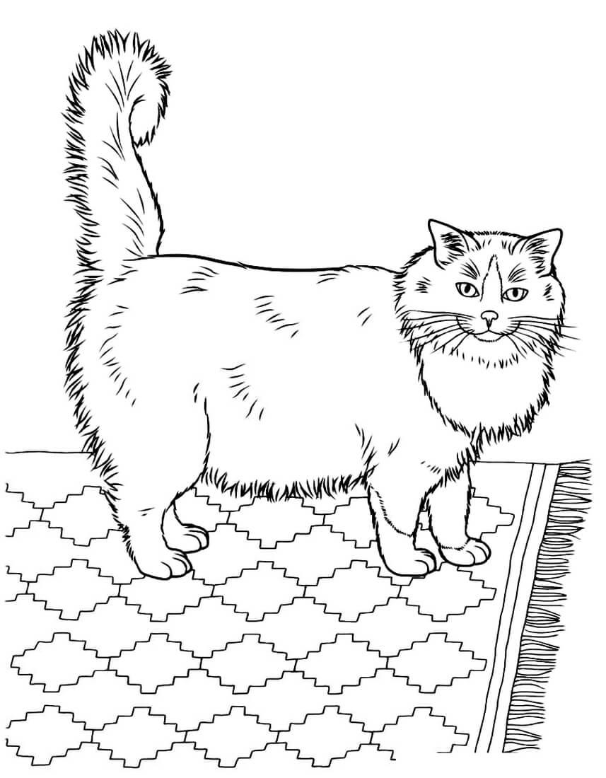 Раскраска Пушистый котик