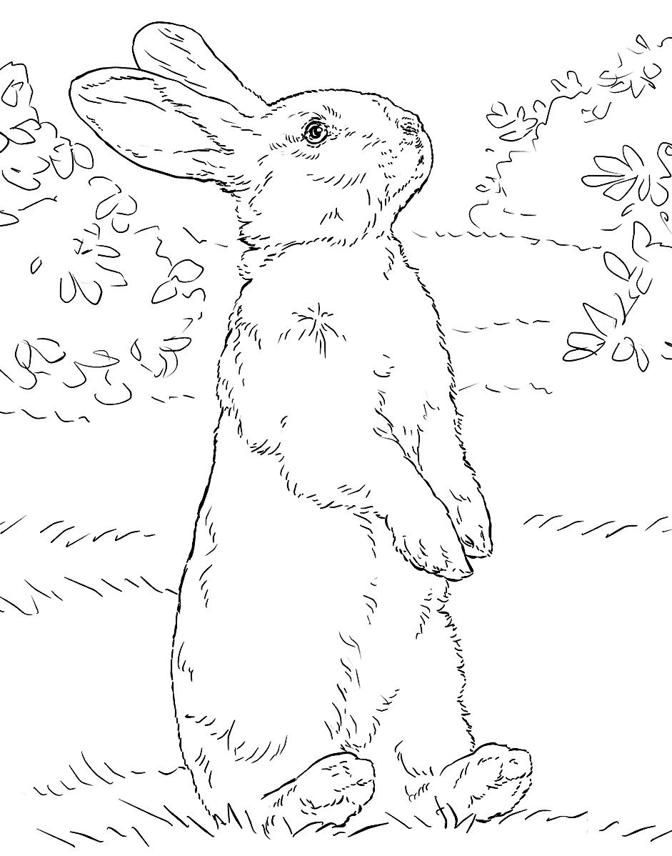 Раскраска Пушистый кролик