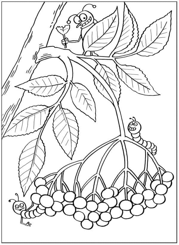 Раскраска Рябина на веточке