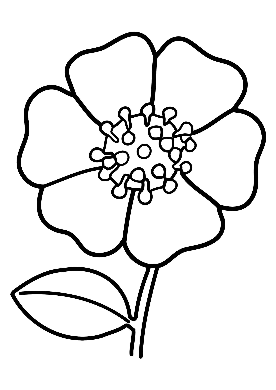 Раскраска Цветочек