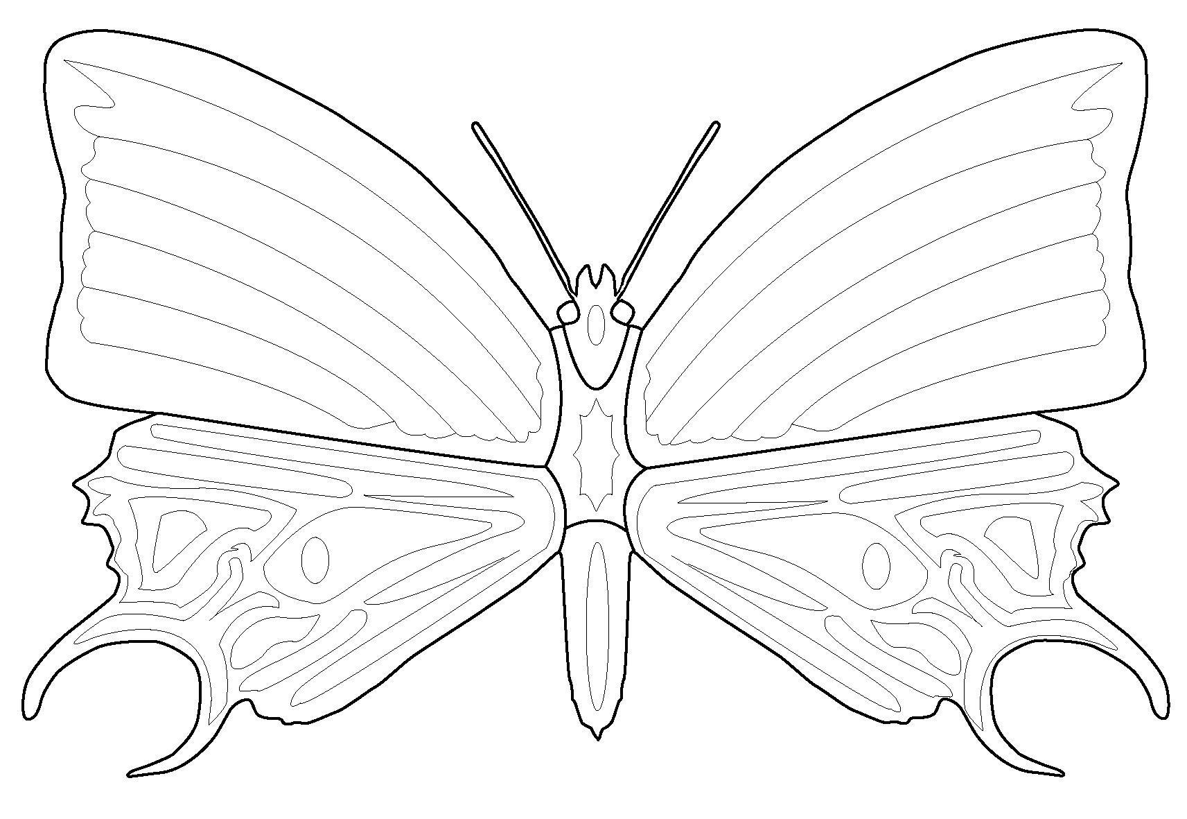 Раскраска Весенняя бабочка