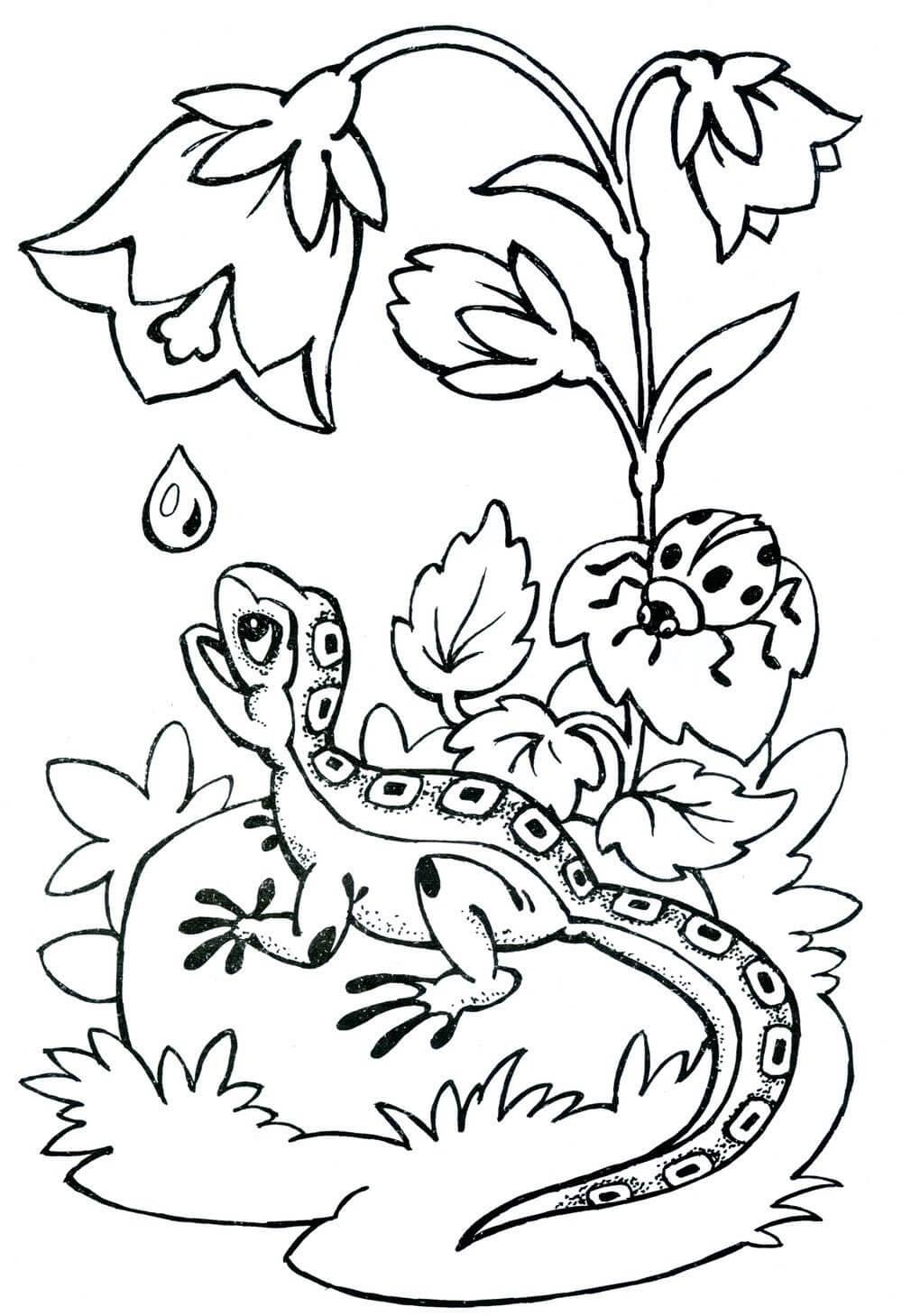 Раскраска Ящерица и утренняя роса